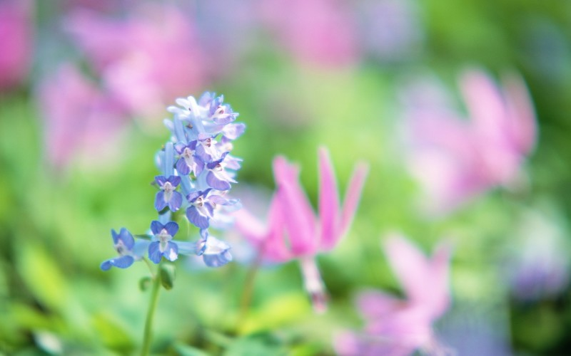 Soft_focus_sweet_flowers_JK031_350A